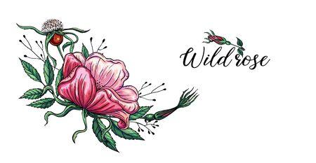 Vector set of delicate pink wild rose flowers