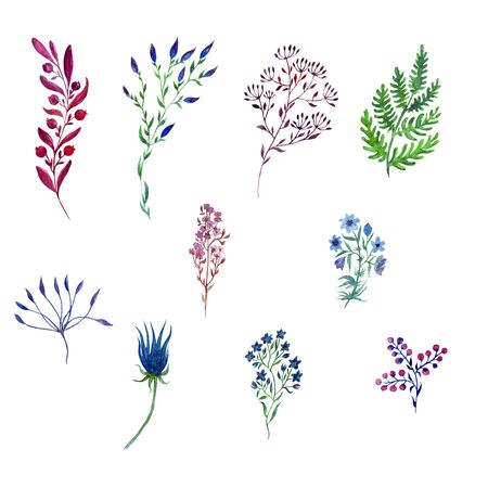 watercolor flower compositions, twigs, blades of grass. Botanical