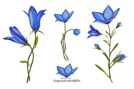 Vector floral bell flower set. Floral plant set.