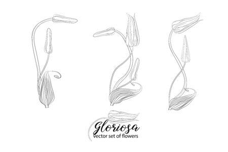 vector set of flowers and beads glorasa Gloriosa