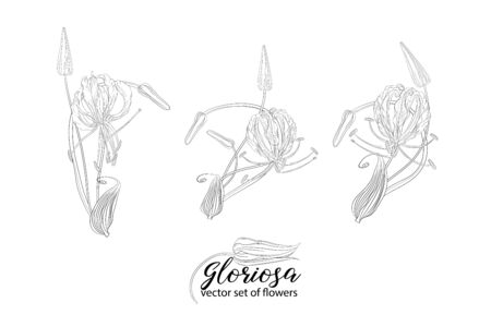 vector set of flowers and beads glorasa Gloriosa