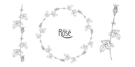 vector floral arrangement with rose flowers and rose buds