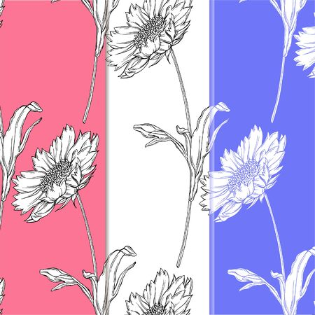 vector graphic floral background with flowers of camomile