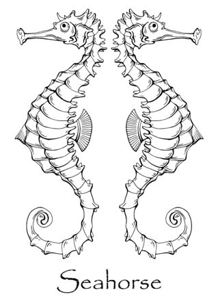 Vector black and white drawing of a sea horse Ilustrace
