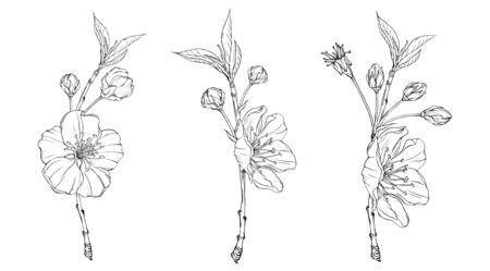 spring flower graphic blooming branch