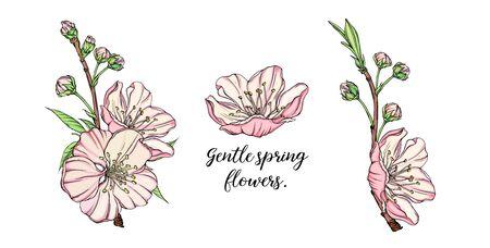 vector delicate spring flower arrangement