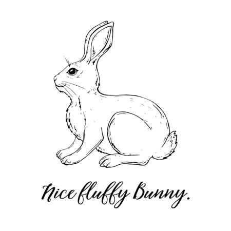 Vector Graphic of a Cute fluffy Bunny. Rabbit, Pet.
