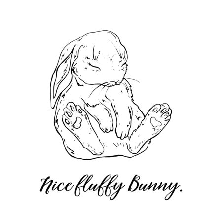 Vector Graphic of a Cute fluffy Bunny.