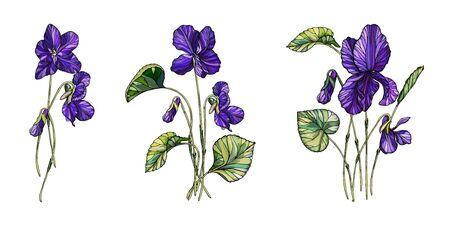 Vector floral composition of flowers of violets. Violet fragrant.