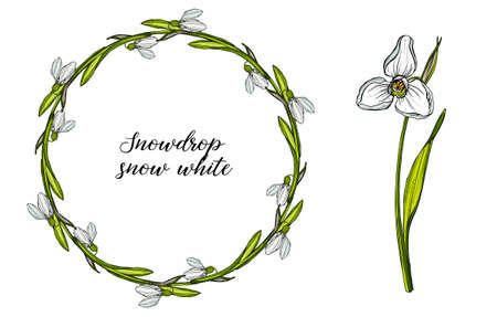 Vector floral set with flowers of snowdrops. Spring flowers. Ilustrace