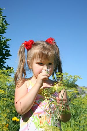 smells: The little girl smells a camomile