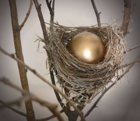 Branch with small nest, containing a bright golden egg. Stock Photo