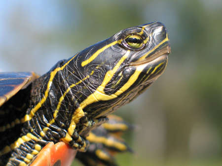 Close-up of a turtles head. Stock Photo