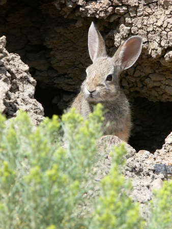 Rabbit peeking out of hole.