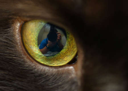 Close-up of a cats eye, with reflection of photographer in pupil.
