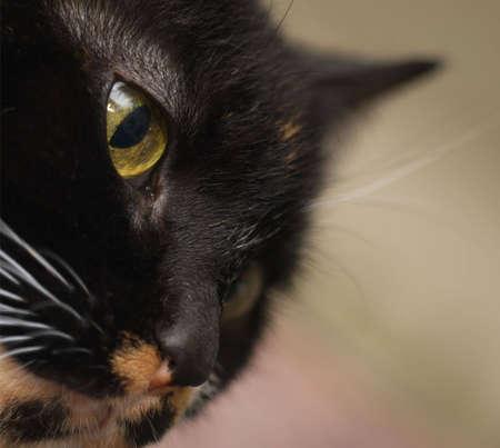 Close up of calico cats face, three-quarter view.