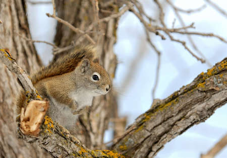 Squirrel perched on a branch with space for text on the right.