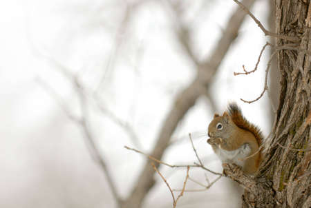 Squirrel perched on a branch, snacking on a seed, with space for text on the left.