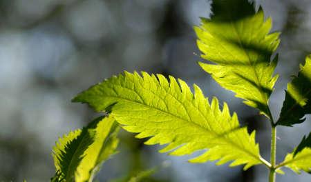 Mottled sunlight through leaves.
