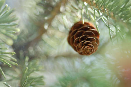 Dreamy, surreal looking pinecone with extremely shallow depth of field. Stock Photo
