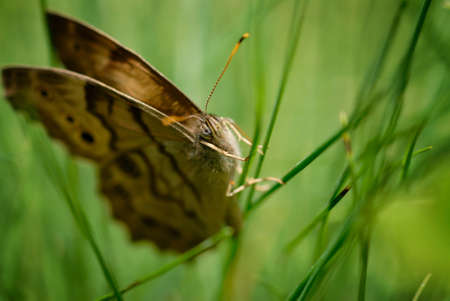 Macro of a butterfly on a blade of grass, with space for text on the right.
