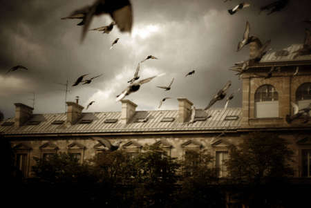 airborn: Painterly, artistic image of pigeons flying across the courtyard of Notre Dame Cathedral in Paris, France. Image has warm tone, and subtle sponge painting and pastel on canvas effects.