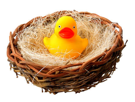 Isolated shot of rubber ducky in nest.
