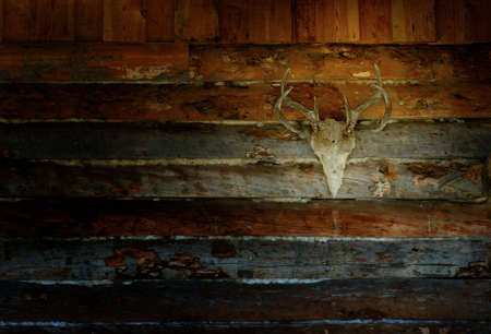 Antlers on Dark Wall Cabin Exterior