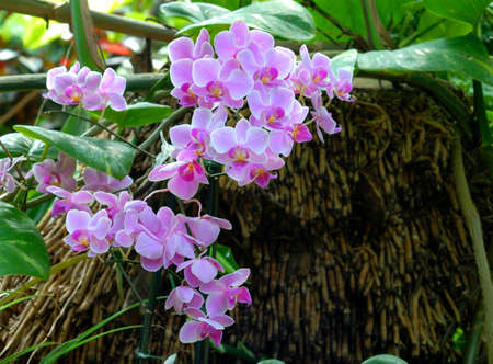 Beautiful purple orchids surrounded by foliage Stock Photo