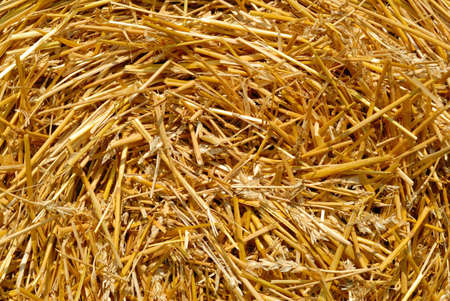 Shot of the center of a spiral hay bale. Stock Photo