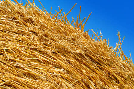 Top of a hay bale against a clear blue sky.