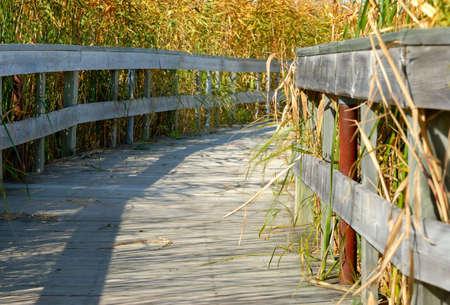 Wooden boardwalk going into a marsh.
