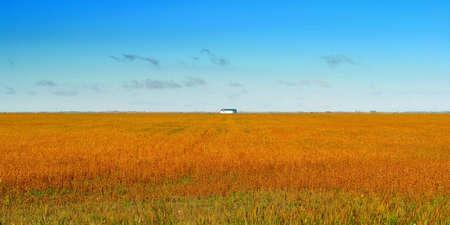 Rust coloured field in Manitoba.