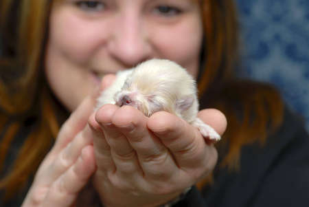 Woman holding tiny Pomeranian puppy in her hand. with shallow depth of field. Stock Photo