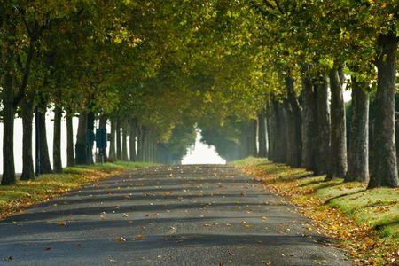 Une bordée d'arbres dans les régions rurales de pays en voie de France, disparaît dans le soleil du matin de début de l'automne. Banque d'images - 1935418