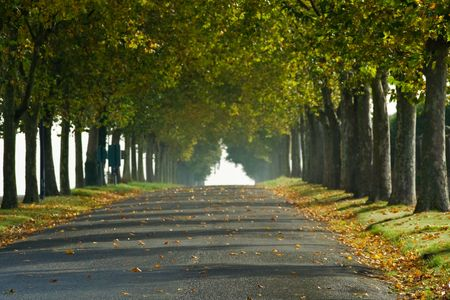 A tree-lined country lane in rural France, fades into the morning sun of early Fall.