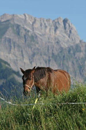 A chestnut horse approaches on an lush green alpine pasture, against a craggy granite peak in the background. Stock Photo - 2102367