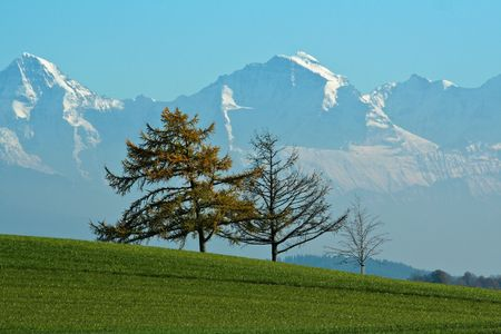 Three bare trees in a green field, against a range of snow-covered mountains, in the Autumn. Stock Photo