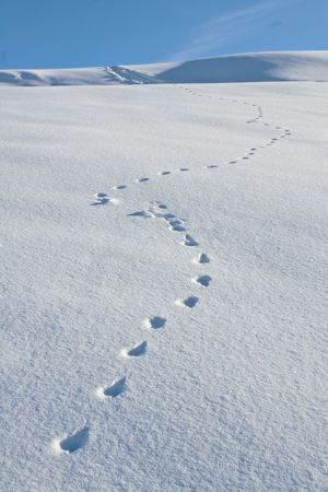 Animal tracks cross a snowfield diagonally, with a blue sky in background.