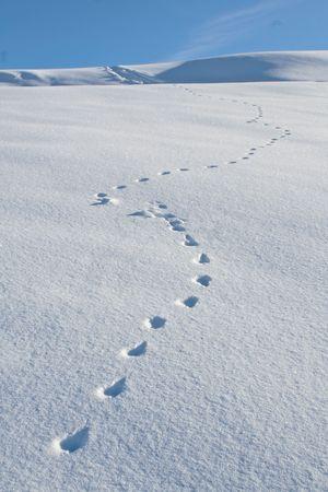 animal tracks: Le tracce degli animali, attraversare un nevaio in diagonale, con un cielo blu in background.