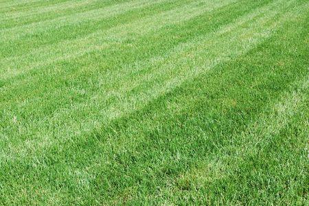 cut grass: fresh cut lawn Stock Photo