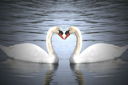 love swans photo