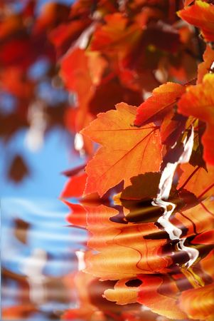 fall leaves and water Stock Photo