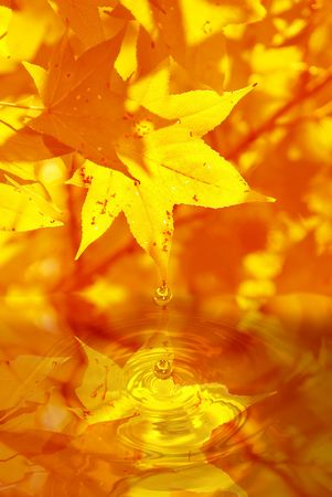 fall leaves with waterdrop photo
