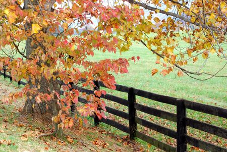 fench: fall foliage and fence Stock Photo