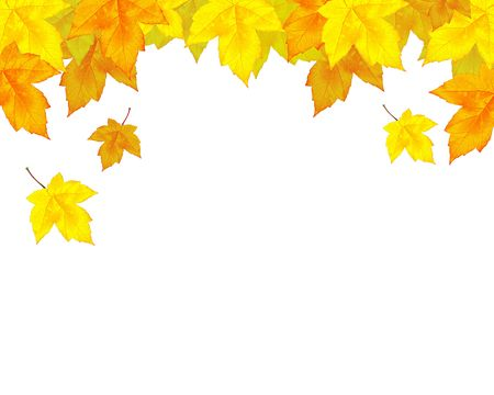 autumn leaves background Stock Photo - 7936072
