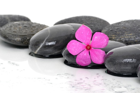 massaging stones wet with pink flower Reklamní fotografie