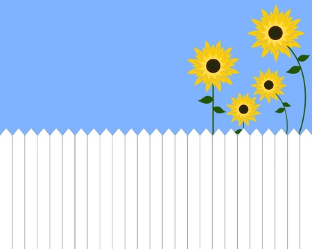 sunflowers and white picket fence Stock Vector - 17418894