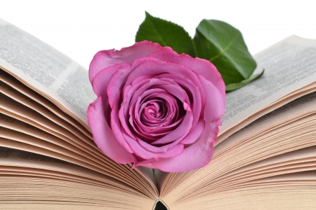 pink rose bookmark lying in book photo