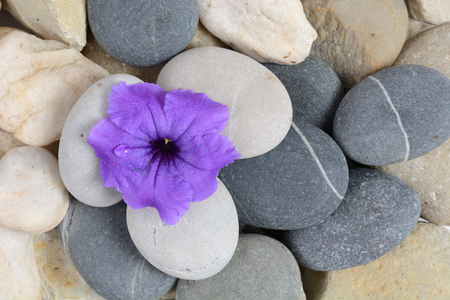 purple flower growing in stones nature background